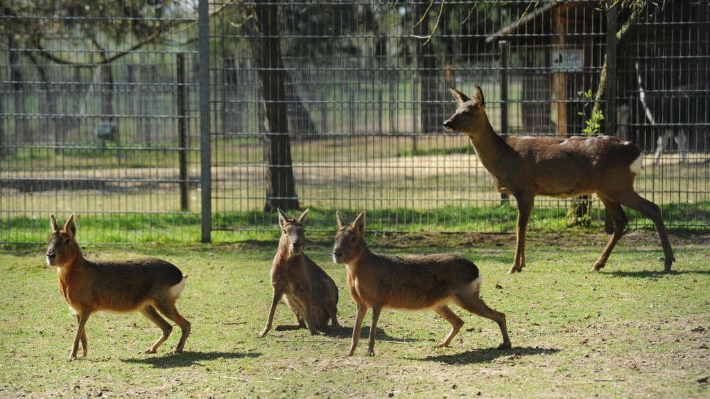 Lich Tierpark