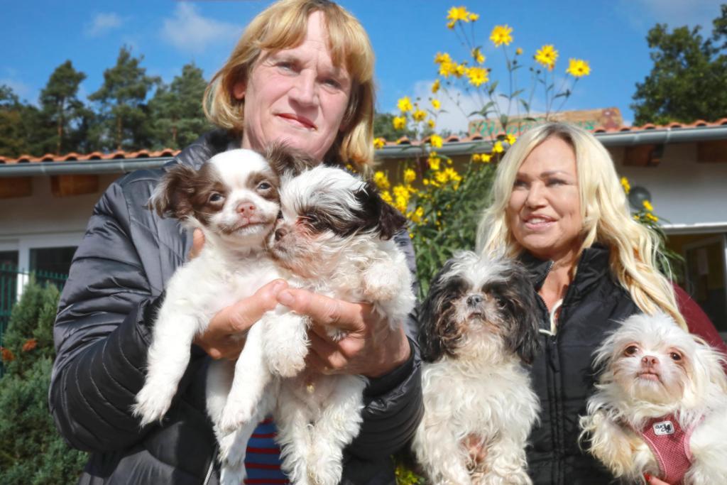 Astrid Paparone und Claudia Maid hoffen, dass die Vierbeiner, die aus einem Animal-Hoarding-Fall stammen, das Tierheim bald verlassen können.